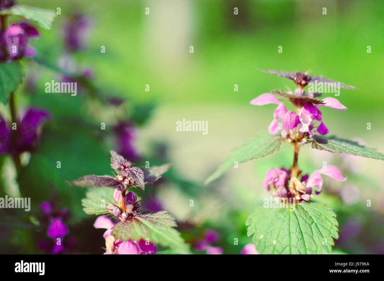Beautiful Pink Flower Small Weed Stock Photos Beautiful Pink