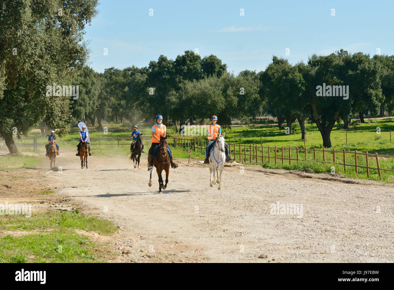 Lusitano portuguese horses in Rio Frio. A purebreed of Portugal - Stock Image