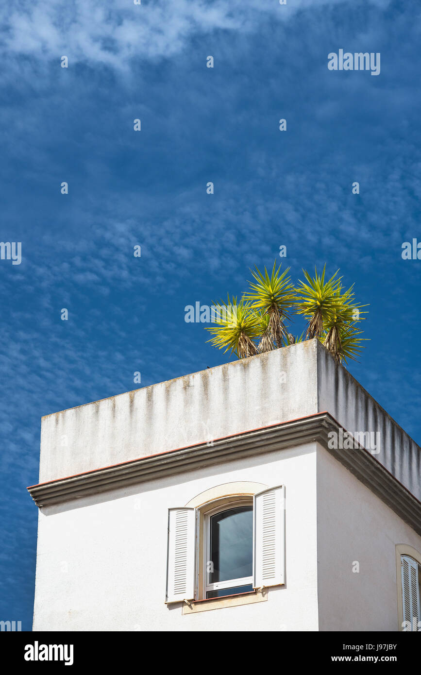 Spain, Seville, high section of La Macarena with tree on roof - Stock Image