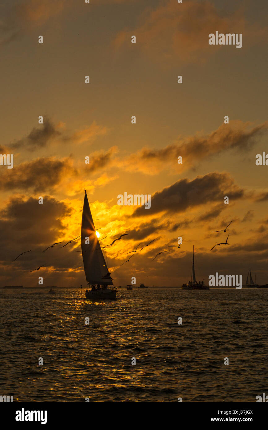 Sunset in Key West Florida with the silhouettes of the sailboats and seagulls Stock Photo