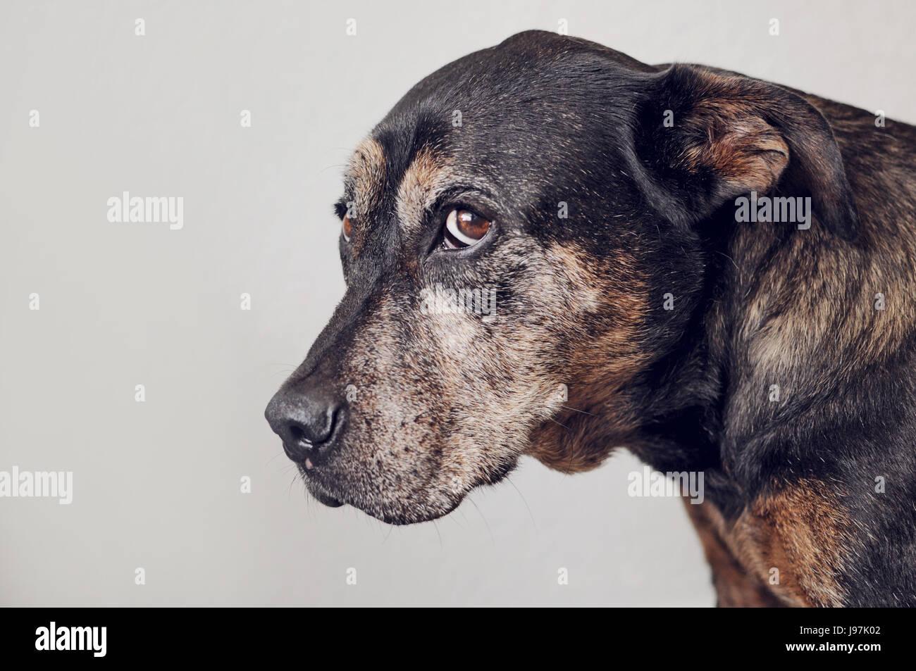 ashamed dog stock photo 143383410 alamy