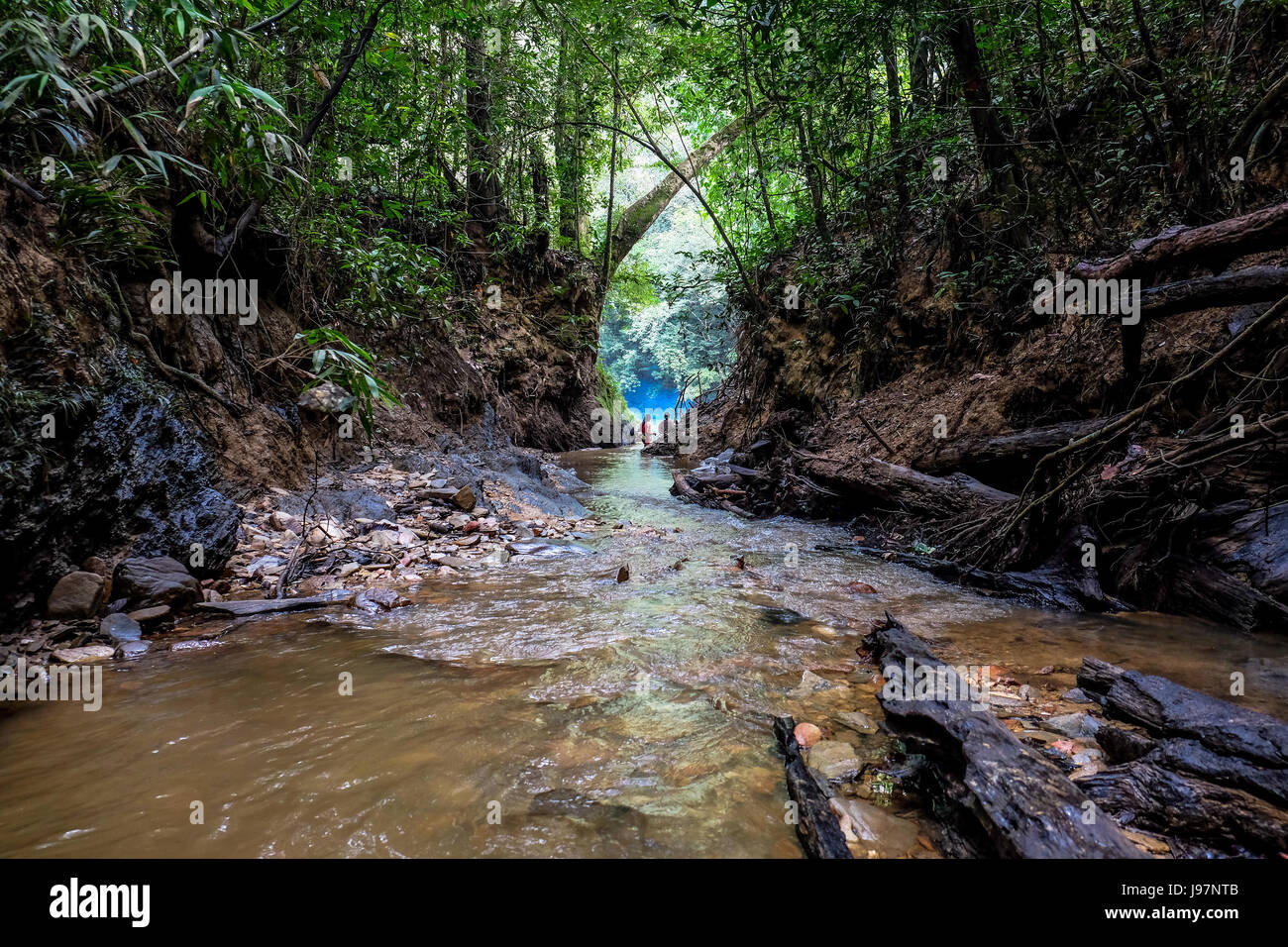 Isolated trail in the Heart of Borneo in West Kalimantan, Indonesia. - Stock Image