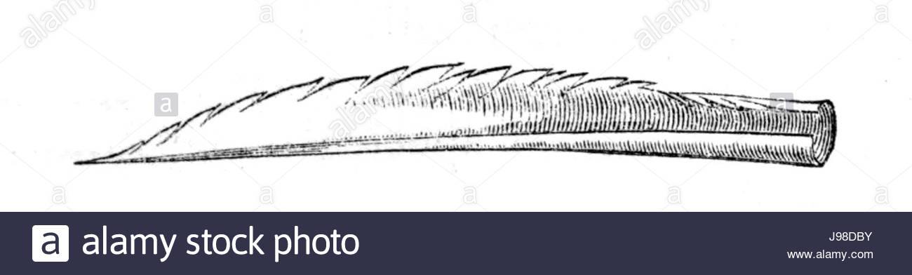 Natural History, Birds   Humming bird tongue - Stock Image