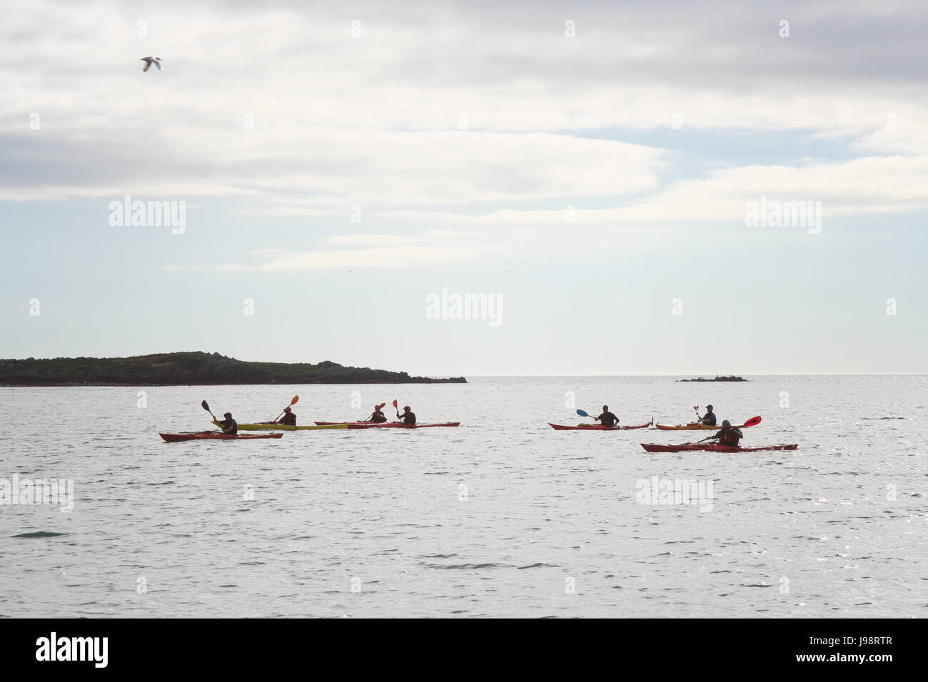 Group Kayaking , canoeing in Dublin Bay, Ireland - Stock Image