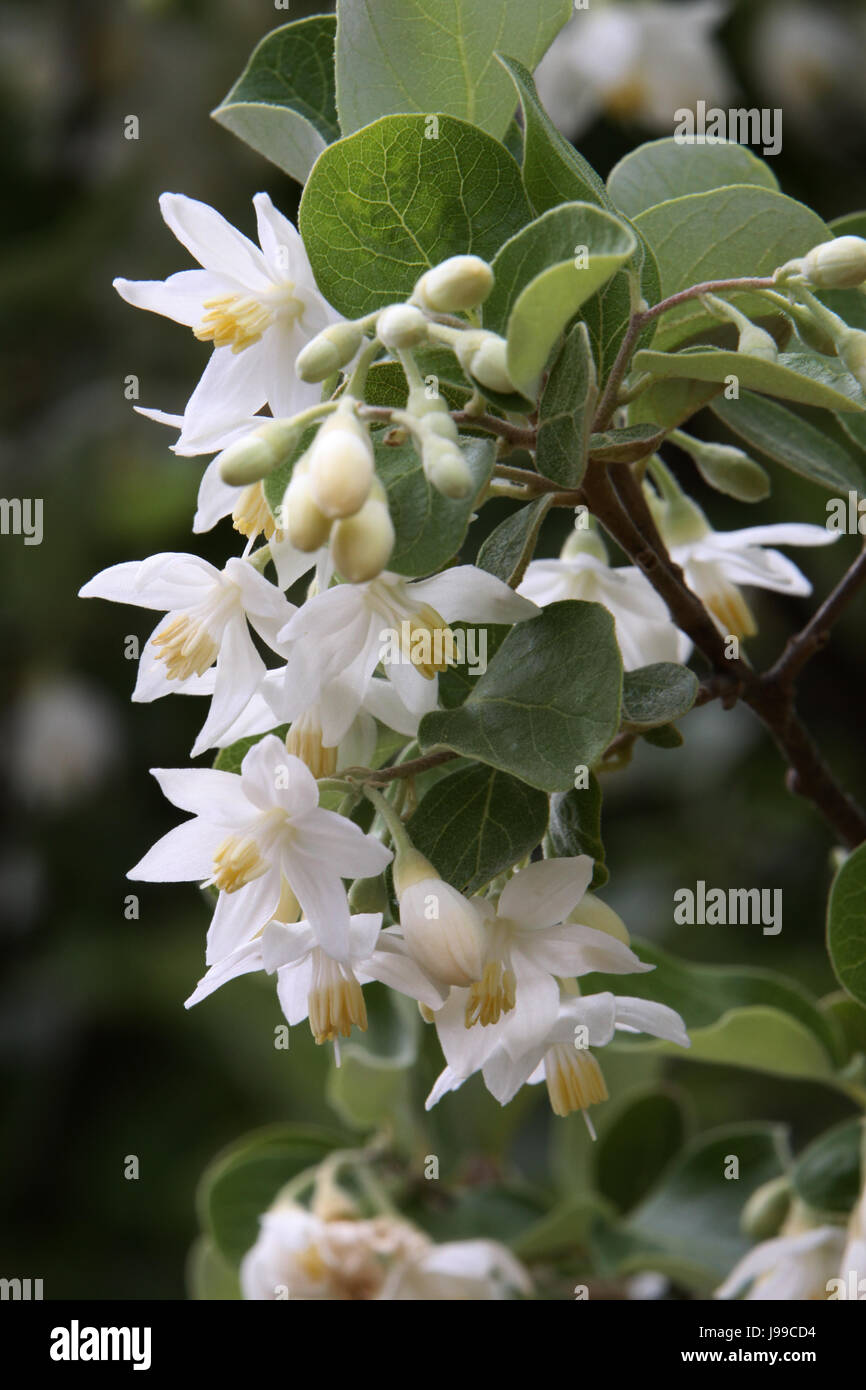 macro, close-up, macro admission, close up view, tree, plant, flower, asia, Stock Photo