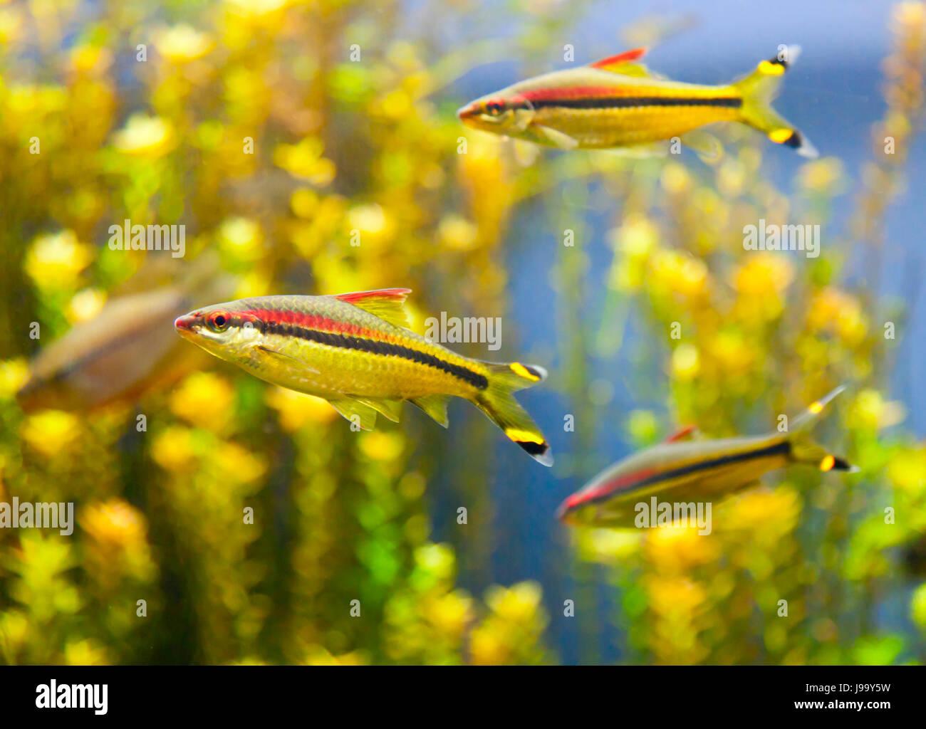 fish, underwater, tropical, swarm, school, navy, marine, salt water, sea, Stock Photo