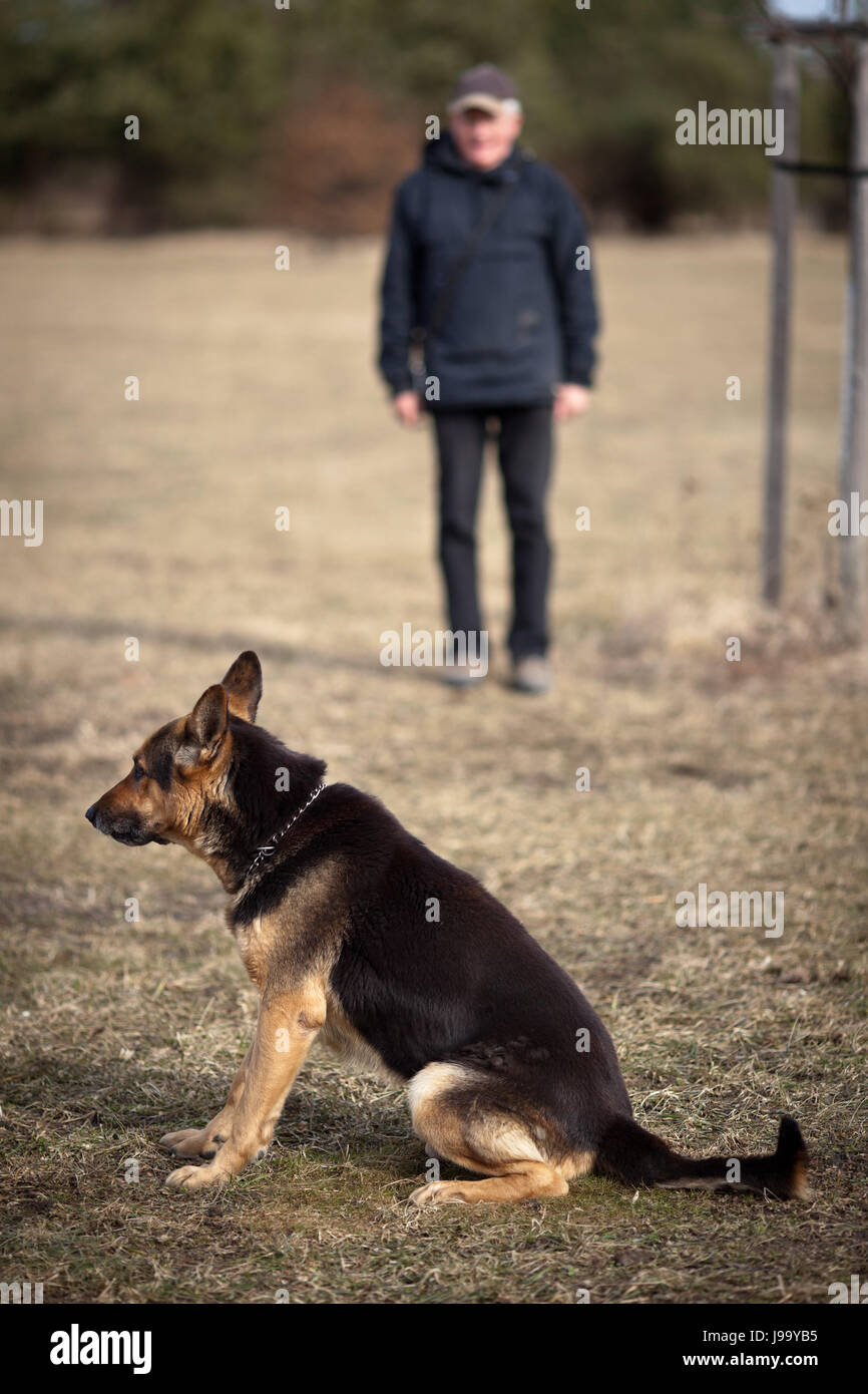 dog, authority, obedient, companion, maddening, pert, coquettish, cute, - Stock Image