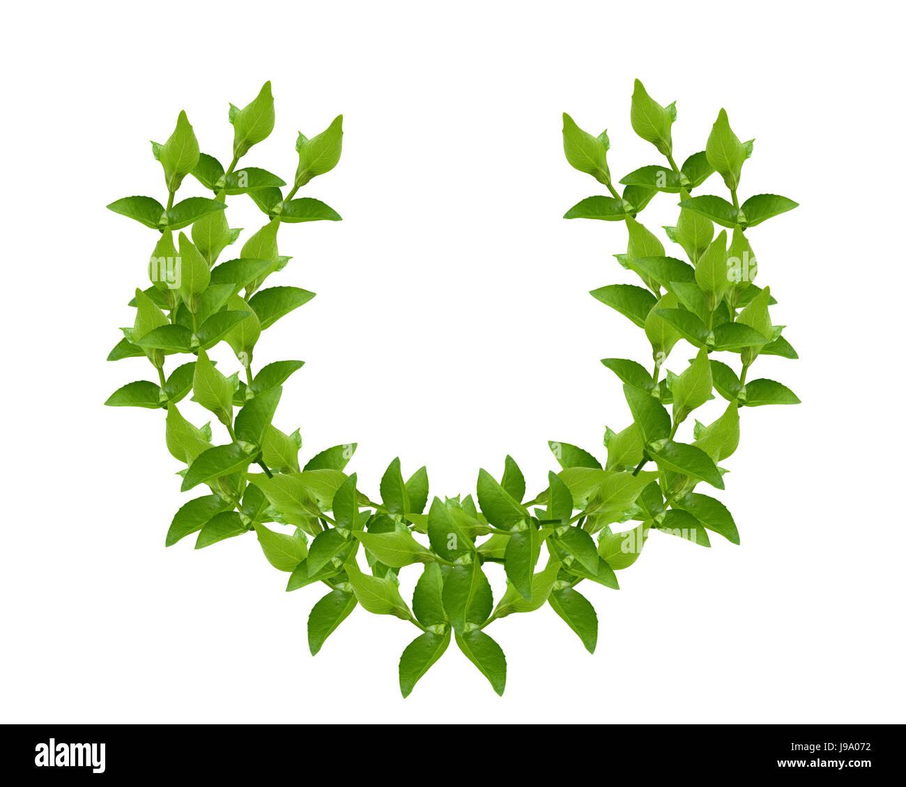leaf, isolated, green, bloom, blossom, flourish, flourishing, greece, greek, - Stock Image