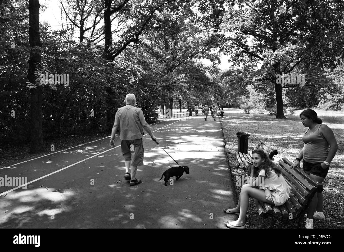 City park in the summer. The man with a small dog goes on avenue. - Stock Image