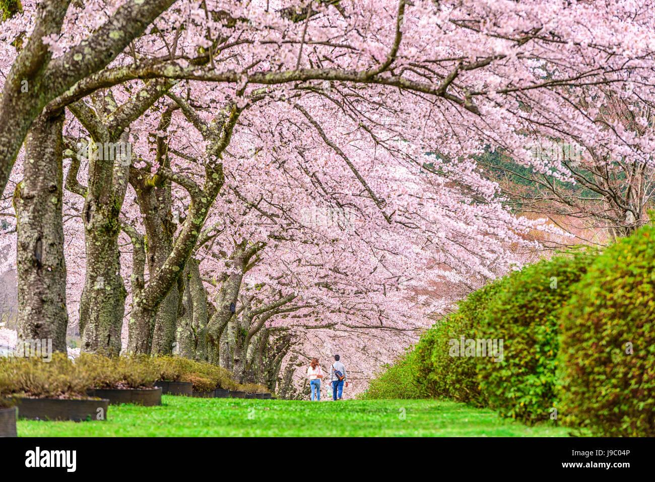 Fuji Reien Cemetery, Shizuoka, Japan in spring. Stock Photo