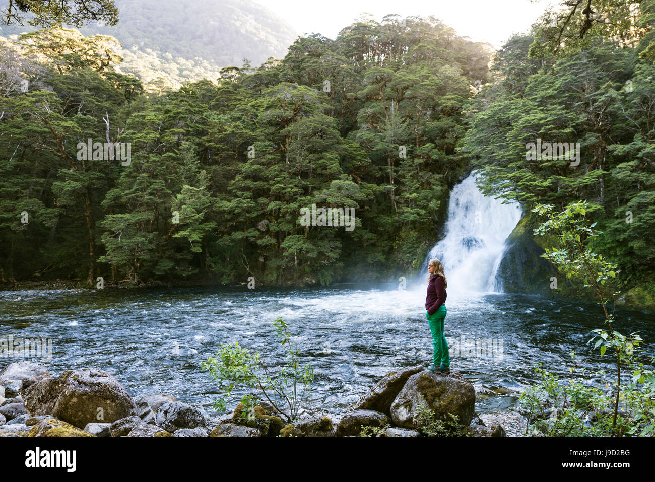 Female hiker standing on stone, waterfall in forest, Iris Burn Falls, Kepler Tack, Fiordland National Park, Southland - Stock Image