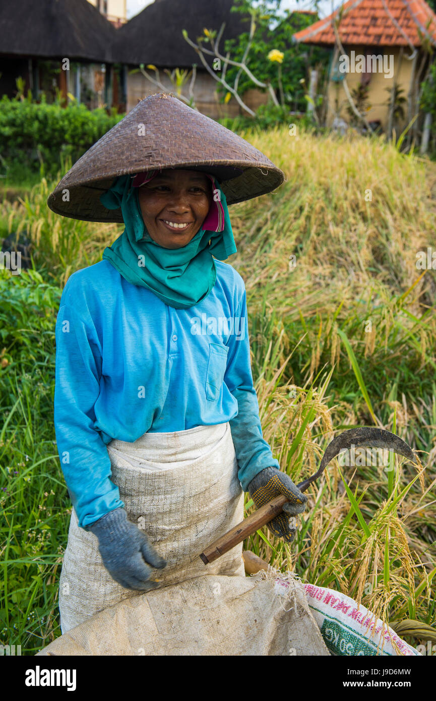 Local woman working in the rice paddies, Ubud, Bali, Indonesia, Southeast Asia, Asia - Stock Image