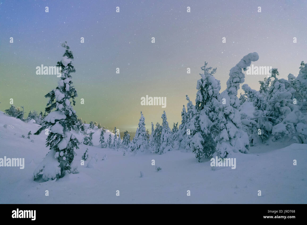 Frozen trees in snowy woods framed by starry sky in the cold polar night, Ruka, Kuusamo, Ostrobothnia region, Lapland, - Stock Image