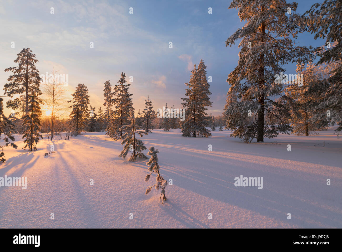 The lights of the arctic sunset illuminate the snowy woods, Vennivaara, Rovaniemi, Lapland region, Finland, Europe - Stock Image