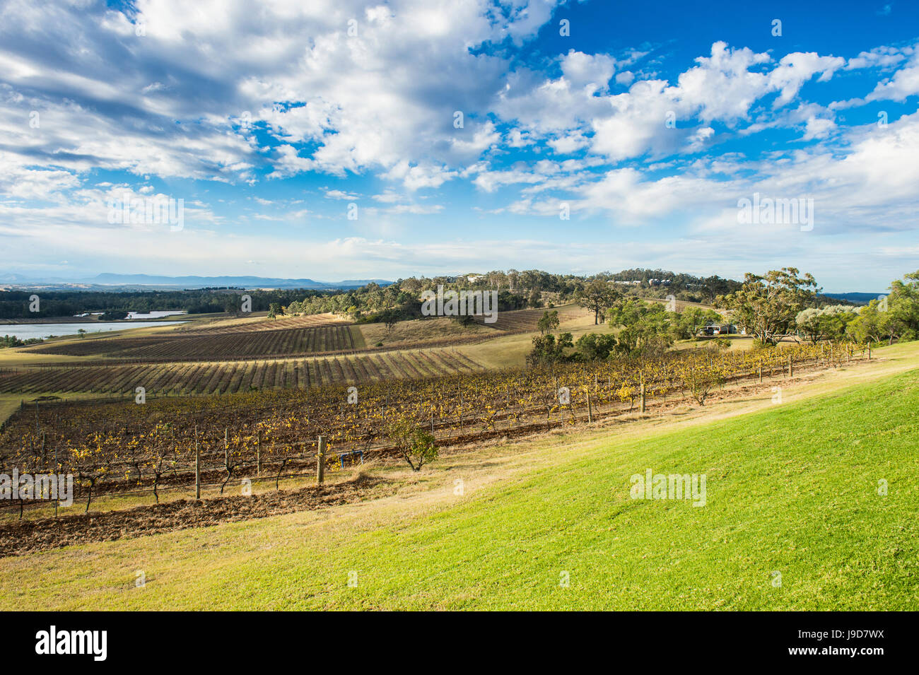 View over the wine region of the Hunter Valley, New South Wales, Australia, Pacific - Stock Image