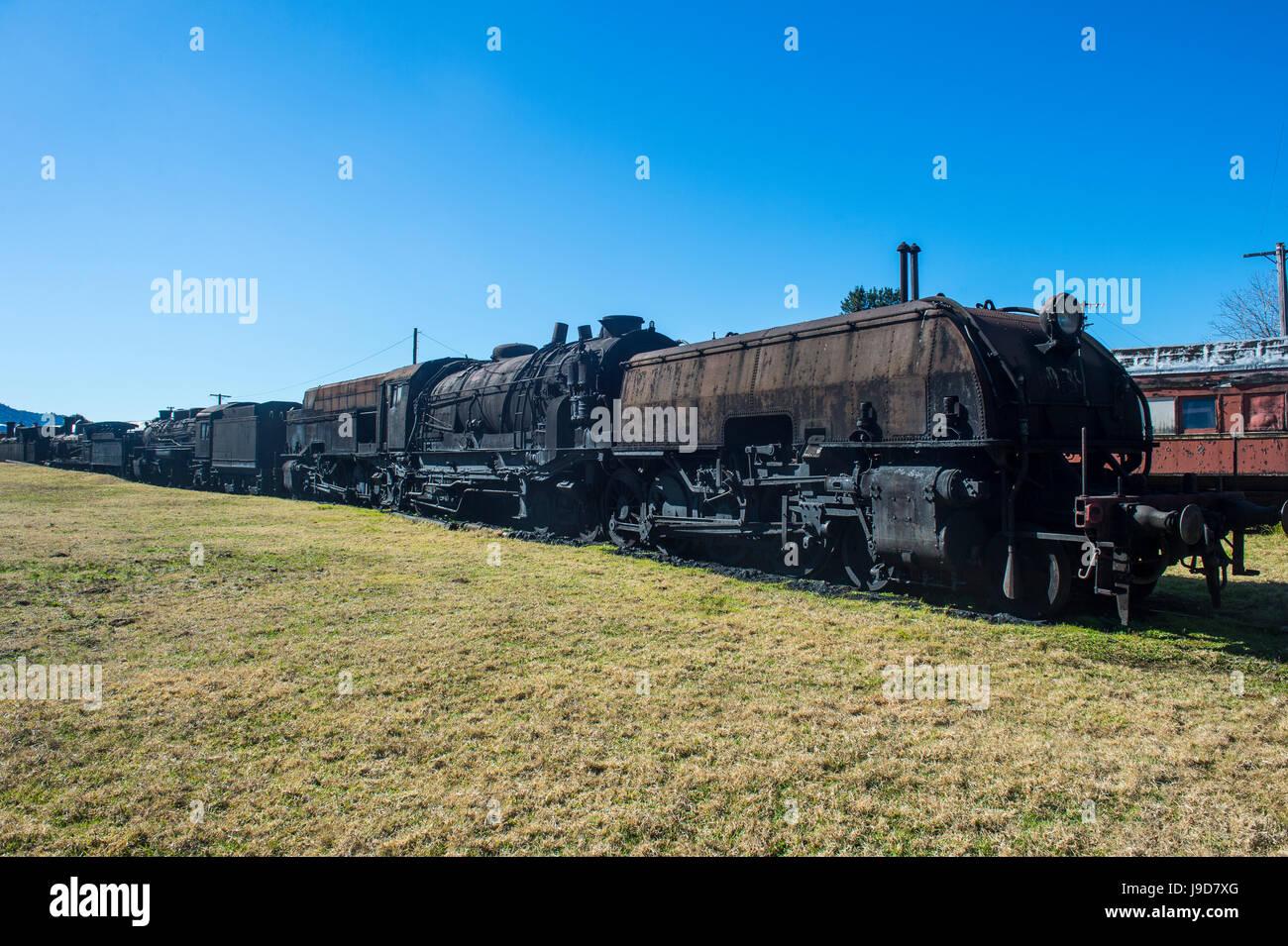 Old steam trains from the Dorrigo railway line, Dorrigo National Park, New South Wales, Australia, Pacific - Stock Image