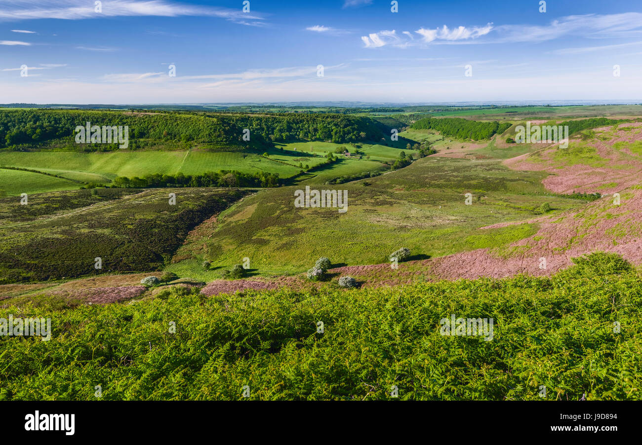 The North York Moors with view of a natural depression, farmland, moorland, and vegetation on a fine spring morning - Stock Image