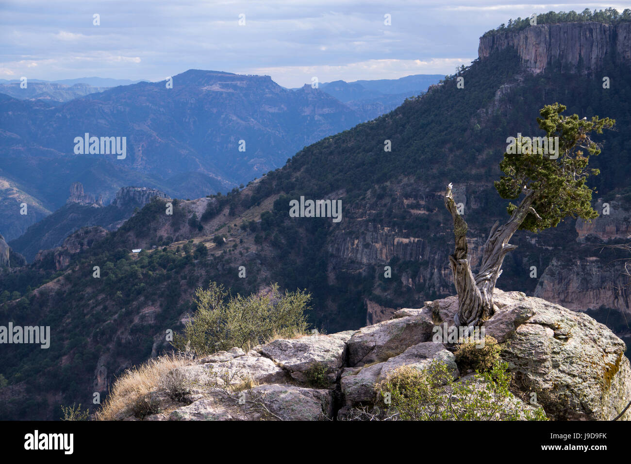 Divisadero, Copper Canyon, larger and deeper than the Grand Canyon, Mexico, North America - Stock Image