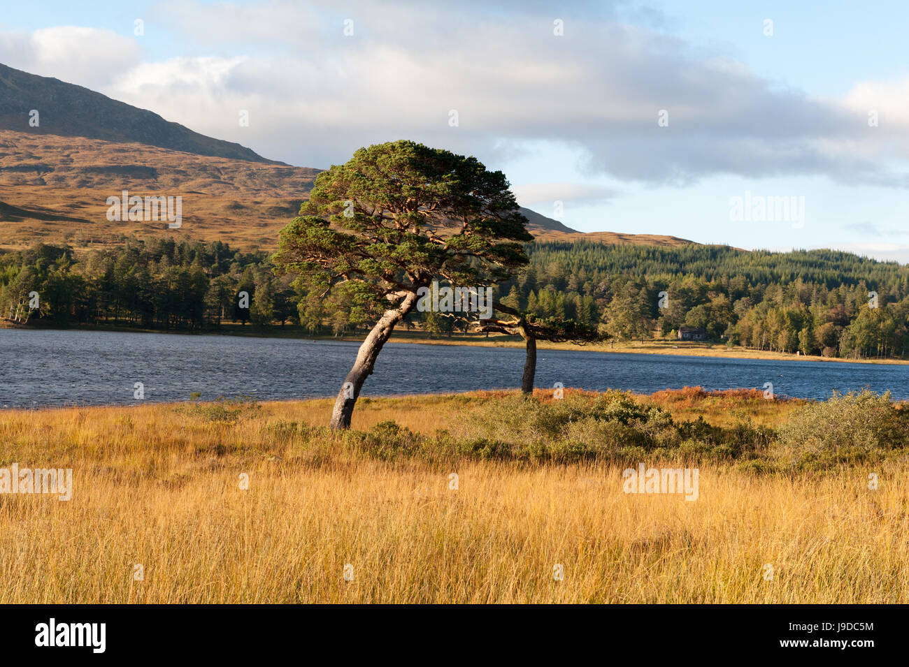 Scottish highlands showing river trees and mountains in autumn colours - Stock Image