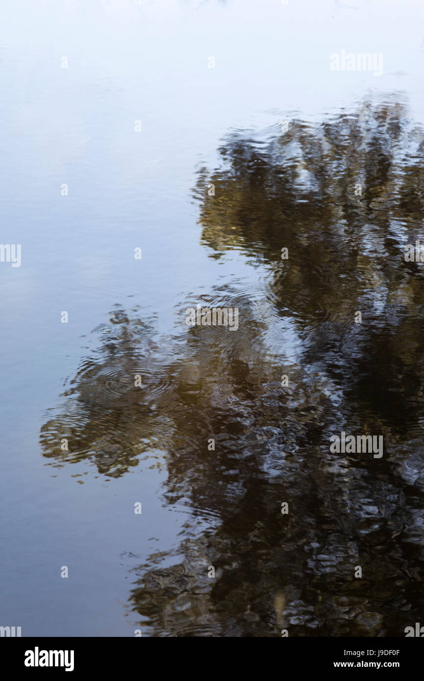 Reflection of a tree in the lake water. - Stock Image