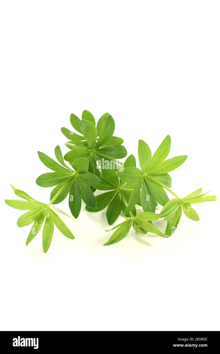 flavour, taste, smell, woodruff, herbs, spice, green, alcohol, spring, flavour, Stock Photo