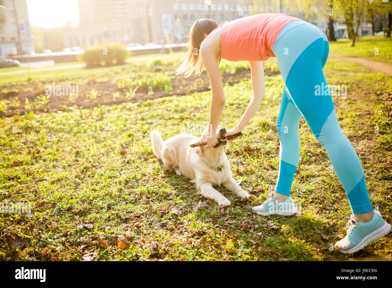 Girl ,,labrador ,playing with stick - Stock Image