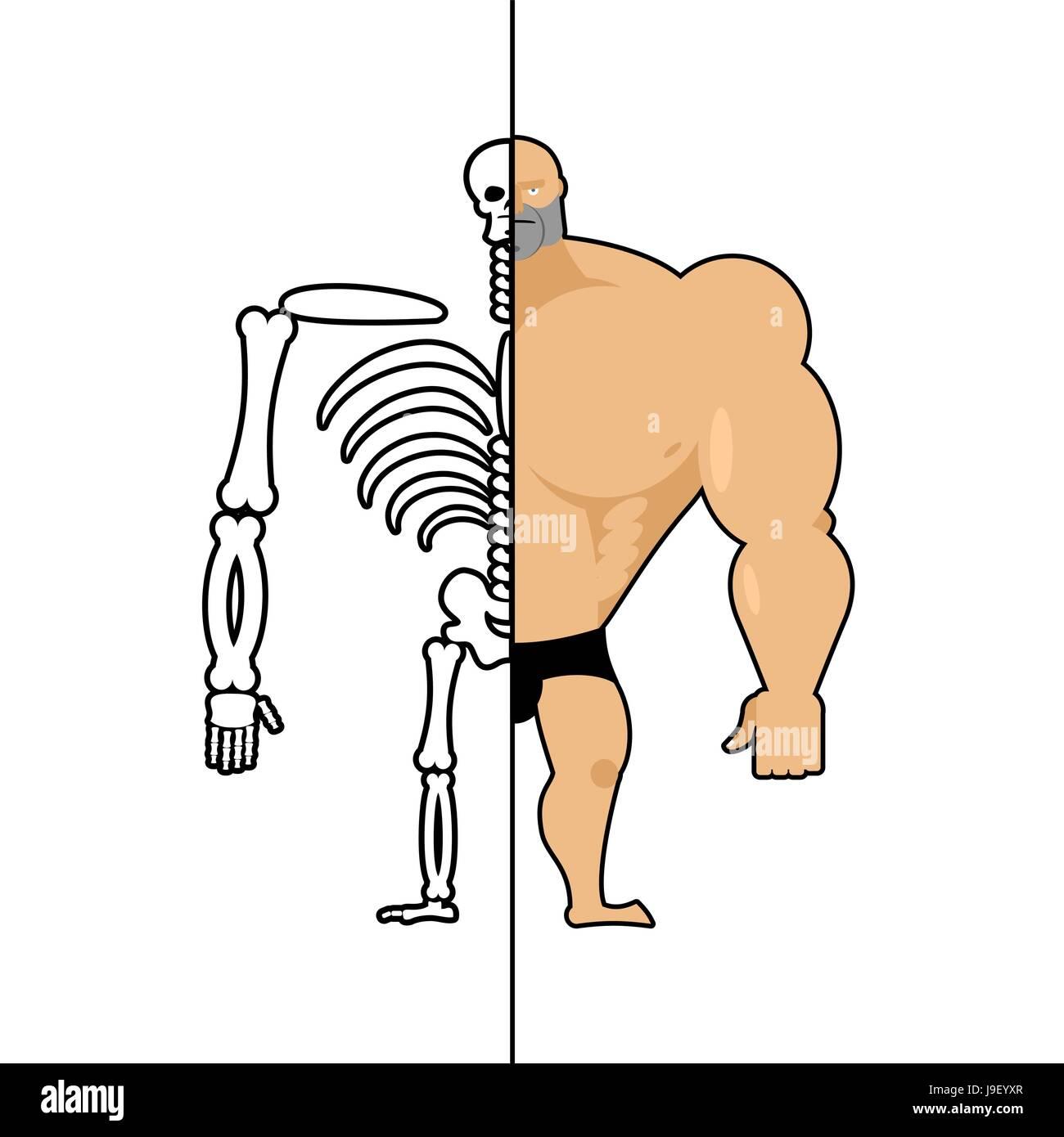 Human Structure Skeleton Men Anatomy Bodybuilder Construction Of