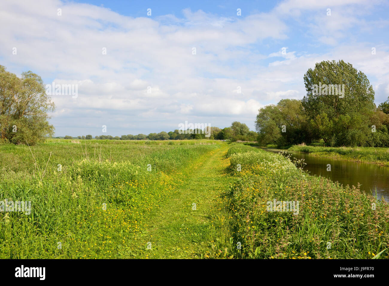 summer meadows with buttercups near a towpath and canal under a blue cloudy sky in yorkshire - Stock Image