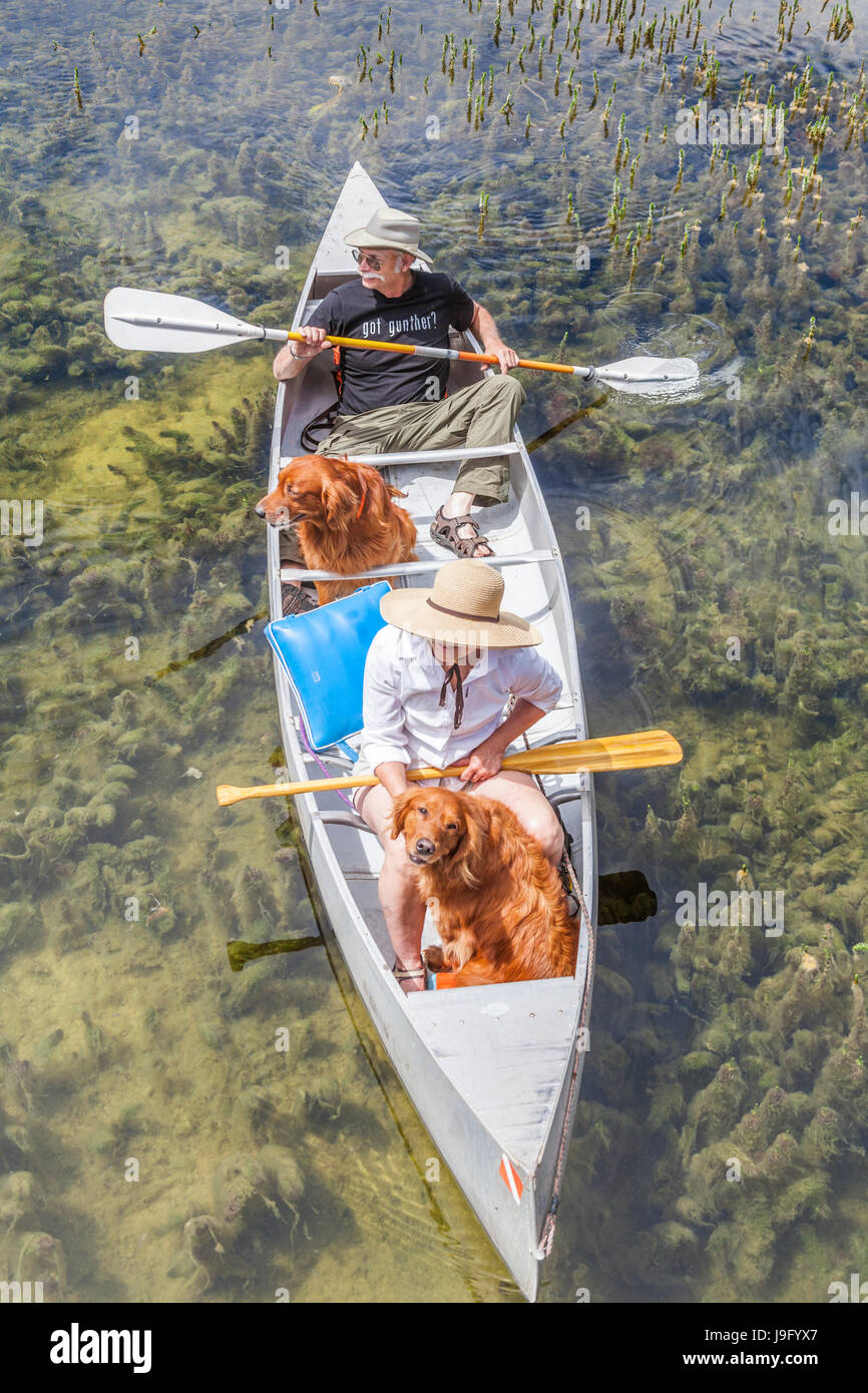 Couple share canoe with their dogs at Twin Lakes in Mammoth Lakes Basin - Stock Image