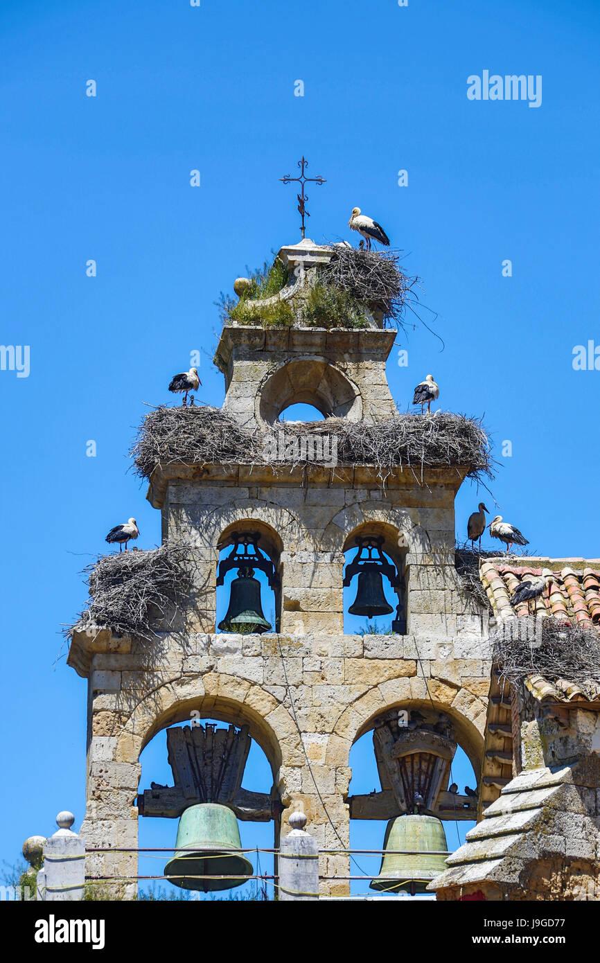 Spain, Castilla Leon Community, Palencia Province, Ampudia City, Stork nests on a belfry, - Stock Image