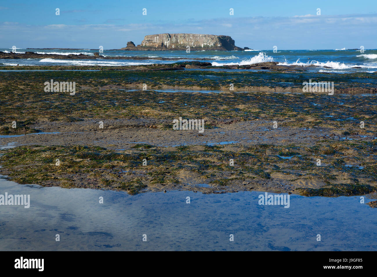 Otter Rock with tidepools, Marine Gardens State Park, Oregon - Stock Image