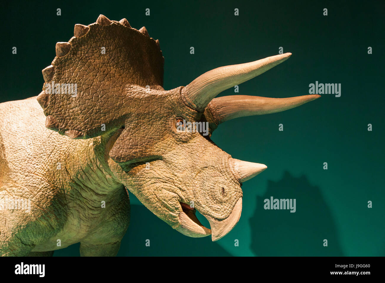 China, Animatronic Model of Triceratops - Stock Image