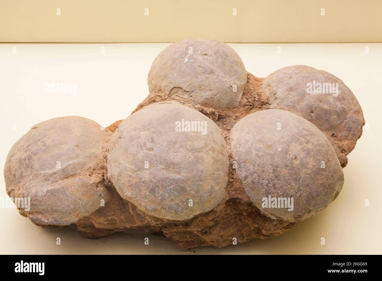 China, Fossilized Dinosaur Eggs - Stock Image