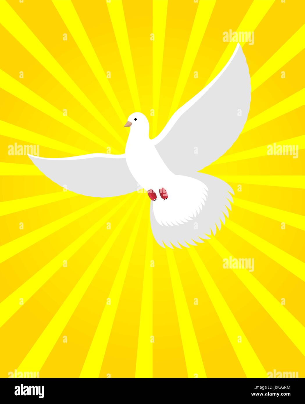 White Dove In Sunny Radiance Divine Light And White Bird White