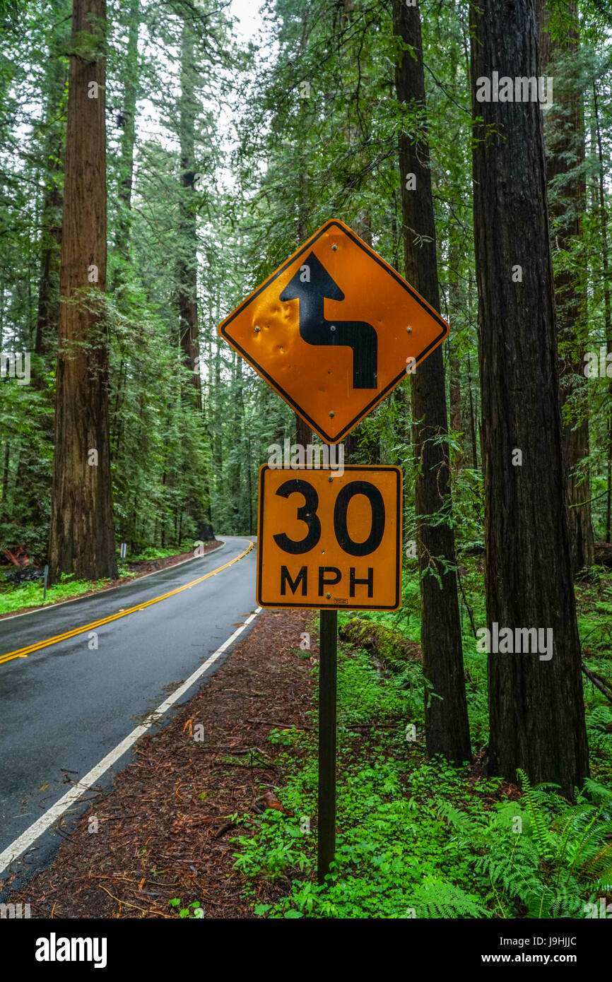 Beautiful street at Redwoods National Park - Stock Image