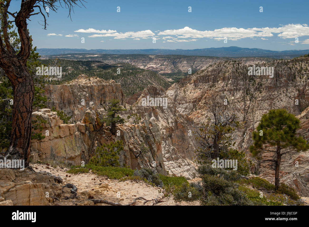 Death Hollow, as seen from Hell's Backbone on the historic road between Escalante and Boulder, Utah - Stock Image