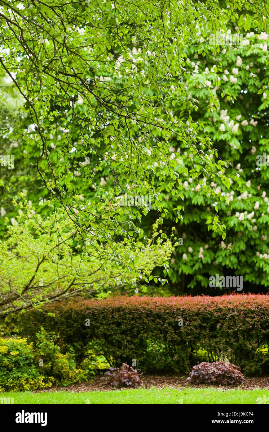 Ireland, County Limerick, Adare, Ireland's Prettiest Village, viallge park, springtime - Stock Image