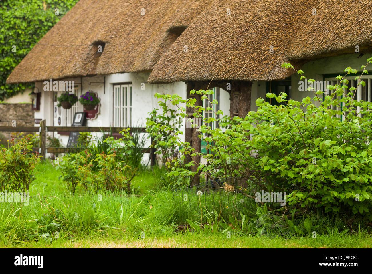 Ireland, County Limerick, Adare, Ireland's Prettiest Village, cottage details - Stock Image