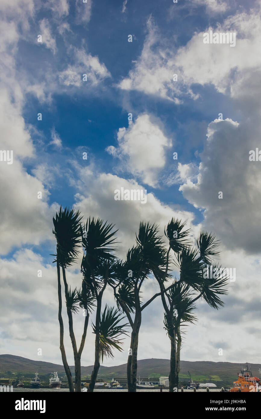 palm trees with blue sky and clouds. - Stock Image
