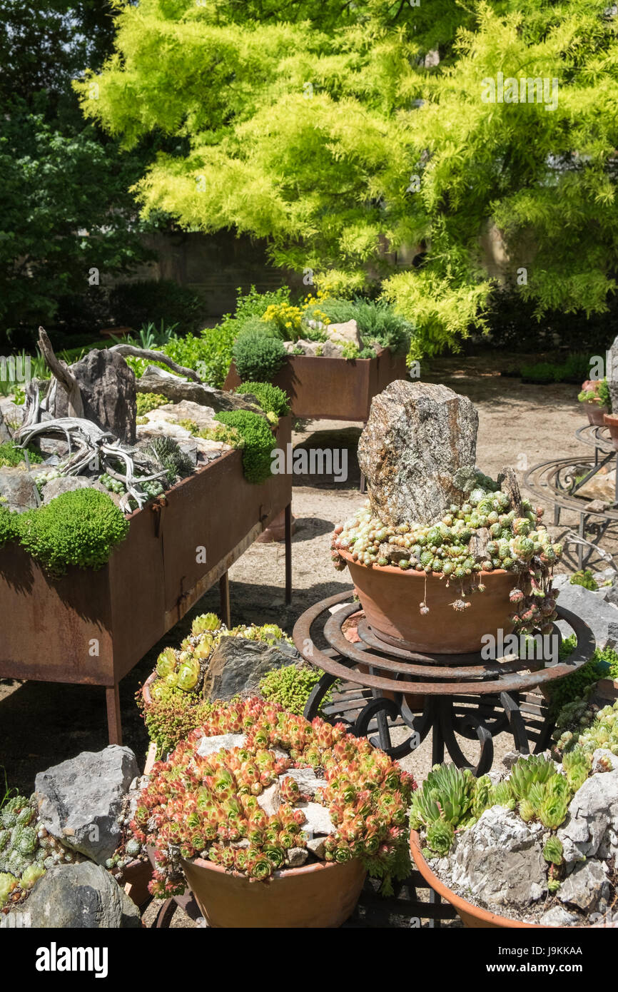 Group of alpine plants in containers at Real Jardin Botanico (Royal Botanic Garden), Madrid, Spain - Stock Image