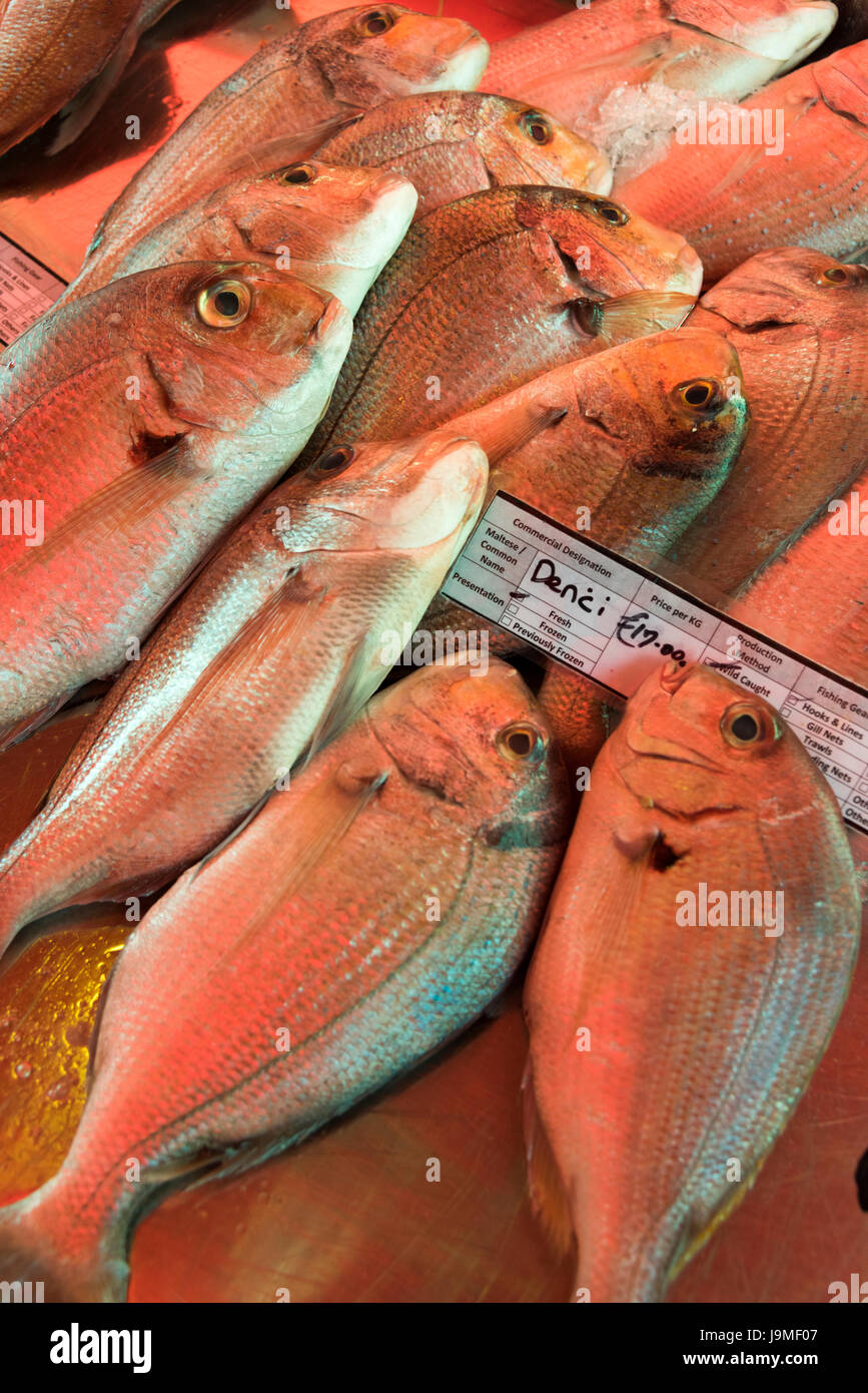 Denci or sea bream fresh fish for sale on a market stall at Marsaxlokk Malta - Stock Image