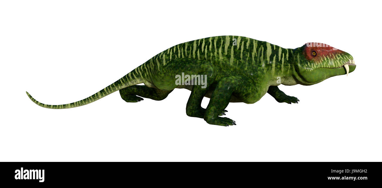 3D rendering of a dinosaur Doliosauriscus isolated on white background - Stock Image