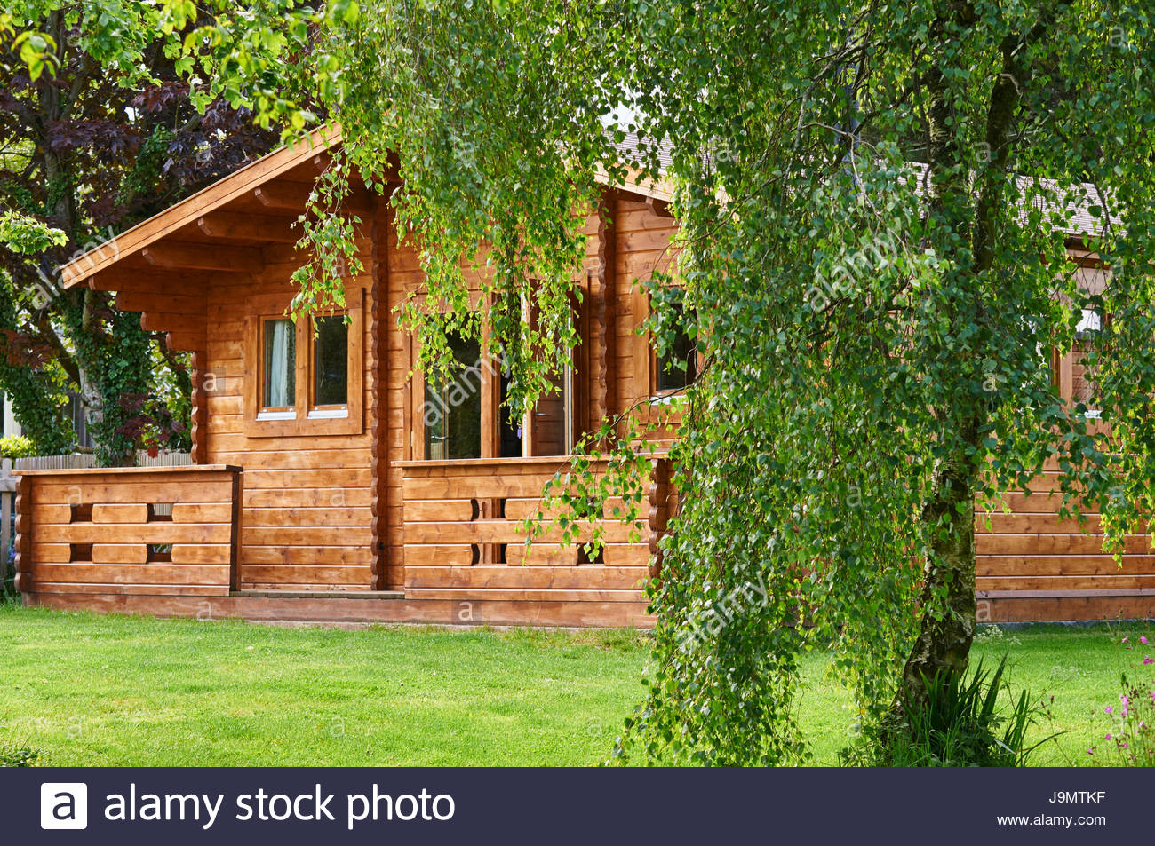 A wooden log cabin taken from under a weeping willow tree in the British uk countryside - Stock Image