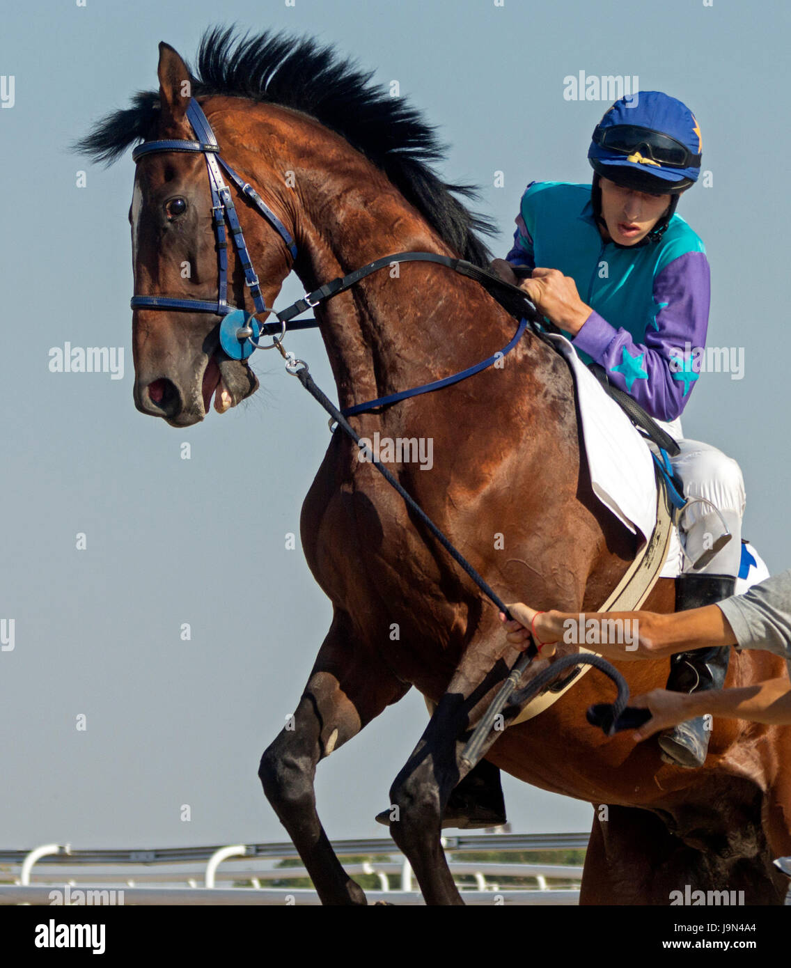 Before horse  trying to reset jockey before the start racing - Stock Image