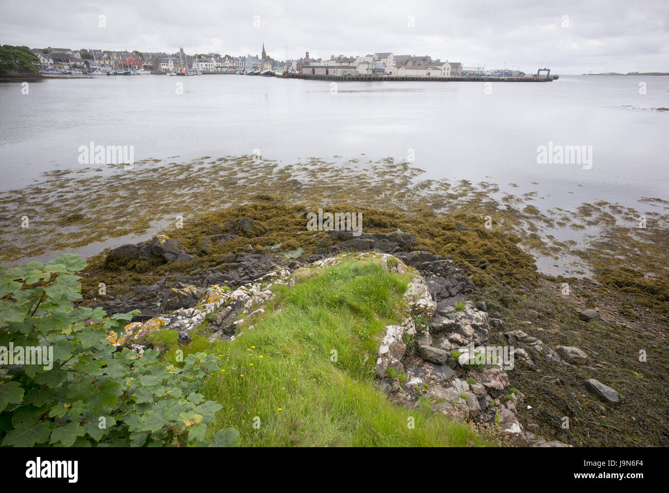 Shoreline with seaweed and rock opposite Stornoway harbour, Outer Hebrides, Scotland, UK - Stock Image