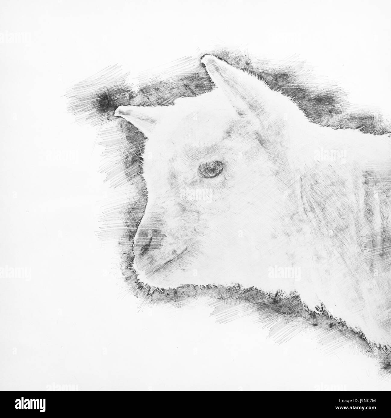 line drawing -head of a white goat against a blue background - Stock Image