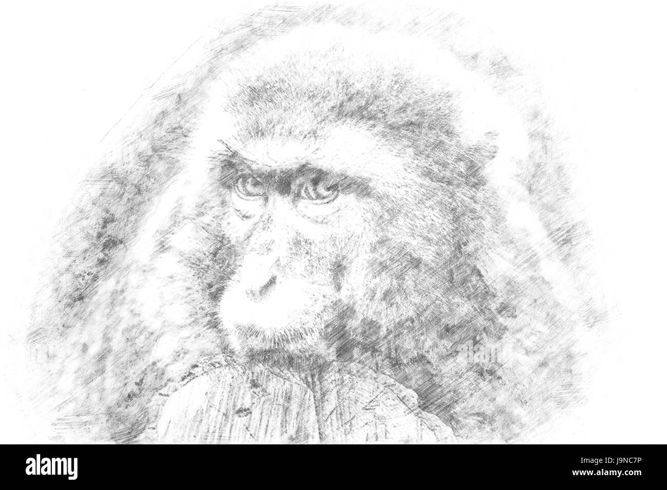 Sketch a monkey looking sad into the camera stock image