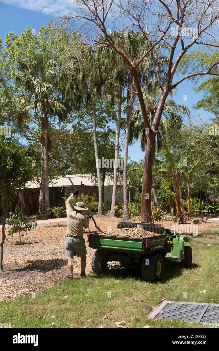 A volunteering gardener working in the Florida Botanical Gardens in ...