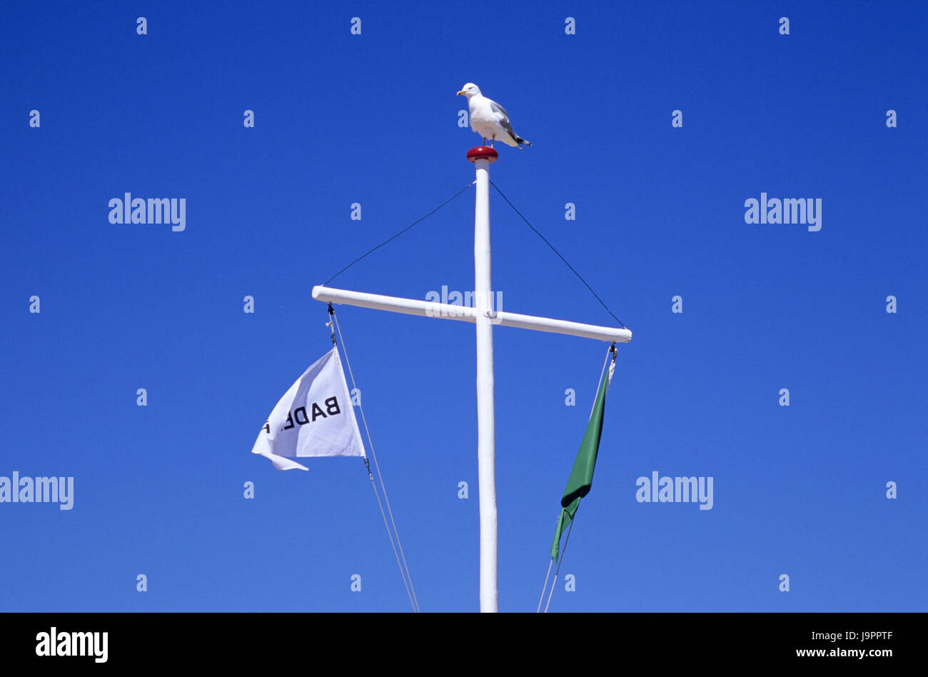 Flagpole,flags,gull,Germany,Schleswig - Holstein,Westerland,north frieze country,mast,cross,pennant,flags,animal,bird,sky,blue,cloudless,the - Stock Image