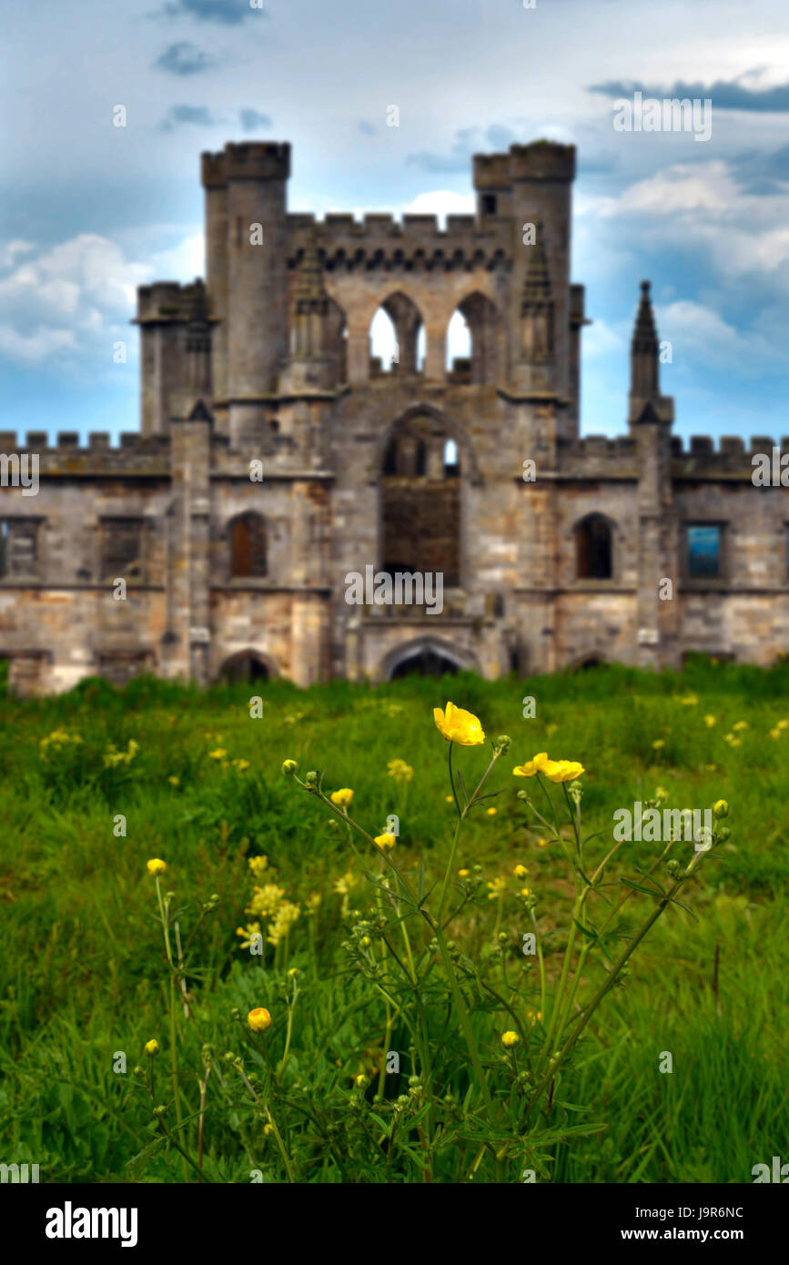 A portait view of the shell of Lowther castle in Cumbria, UK. Daisy flowers and grass in foreground, with clouds - Stock Image